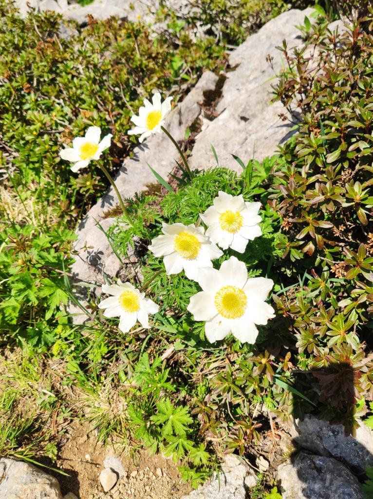 Blumenvielfalt im Rofangebirge