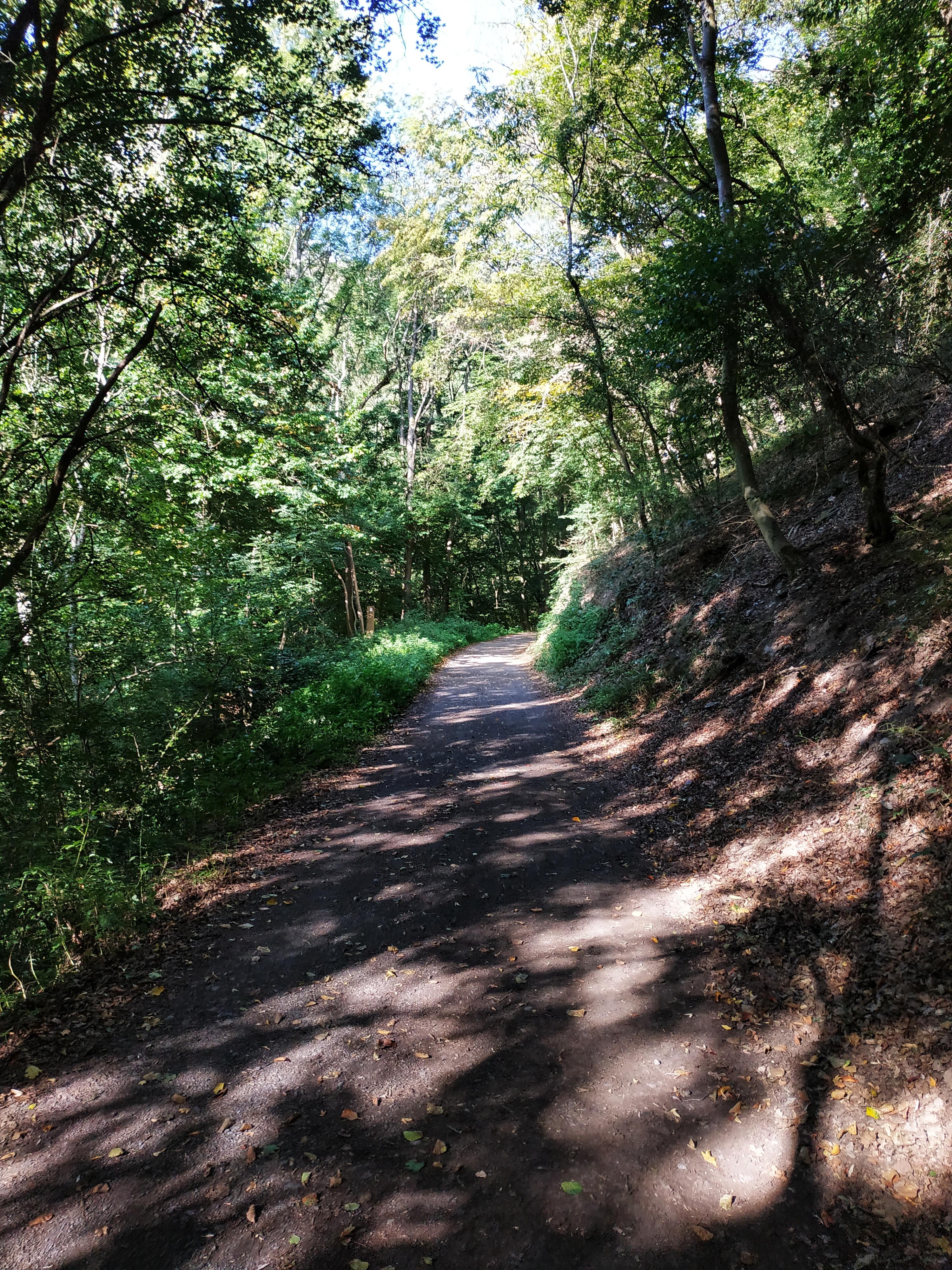 Waldweg - Höhlen- und Schluchtensteig